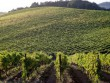 Brunello Winery - 1