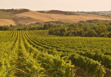 Montalcino, a splendid winery of Brunello